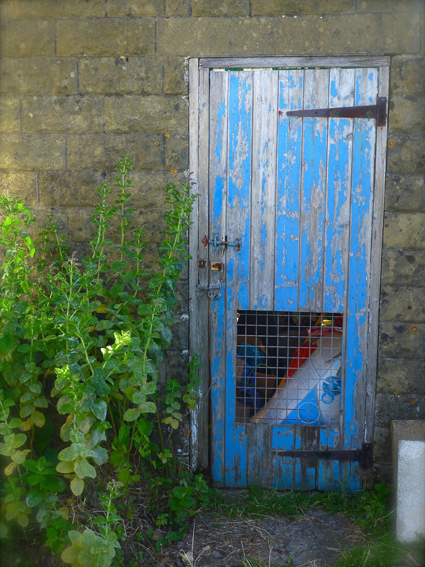 Shed door small