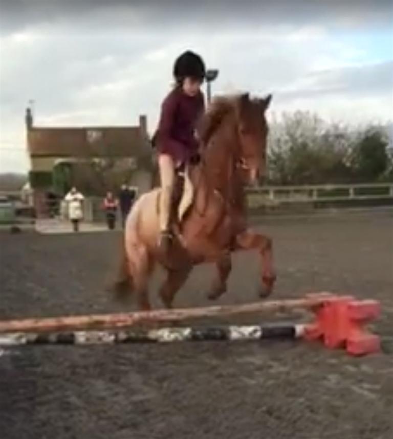 Bertie jumping